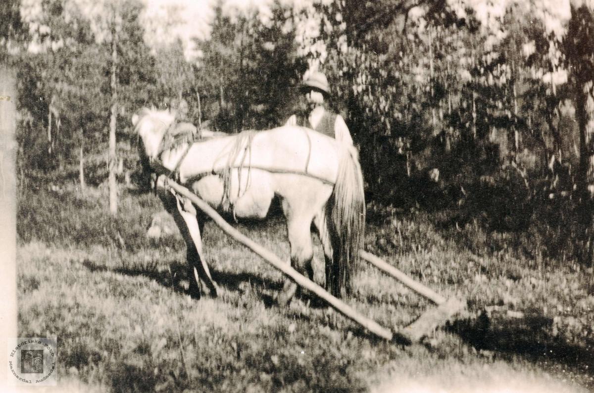 Theodor Ågedal og Blakken med nybrotsarbeid. Grindheim.