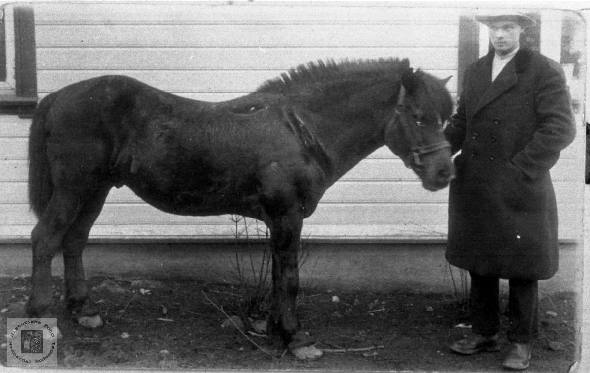 Lars Regevik med hesten