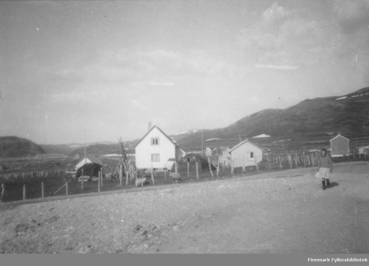 Boliger og uthus i Kokelv?. Det store hvite huset er boligen til Nils p. Pedersen. Den mørke hauen til venstre er en torvstabel. Stabburet ligger bak torva. Til høyre for huset ligger en fjøsgamme. Bygningen ved siden av er en gjennreisningsbrakke. Huset som ligger ytterst til høyre er boligen til Samuel Henriksen. Området er inngjerdet. Det står noen sauer uten for gjerdet. Kvinnen på bildet er muligens Leifine Nikolaisen