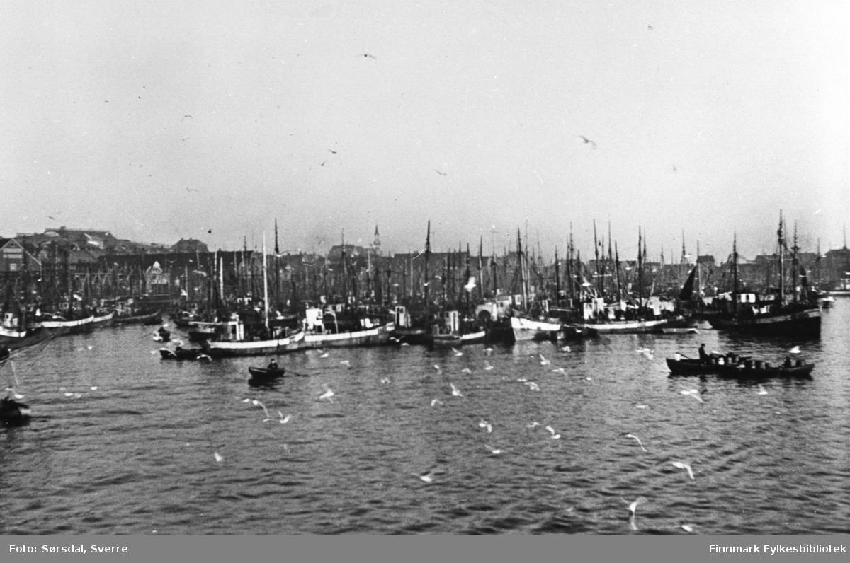 Bildet av Vardø havn i 1936. Det ligger fiskebåter ved kai og det er masse måser . Noen menn ror småbåter.