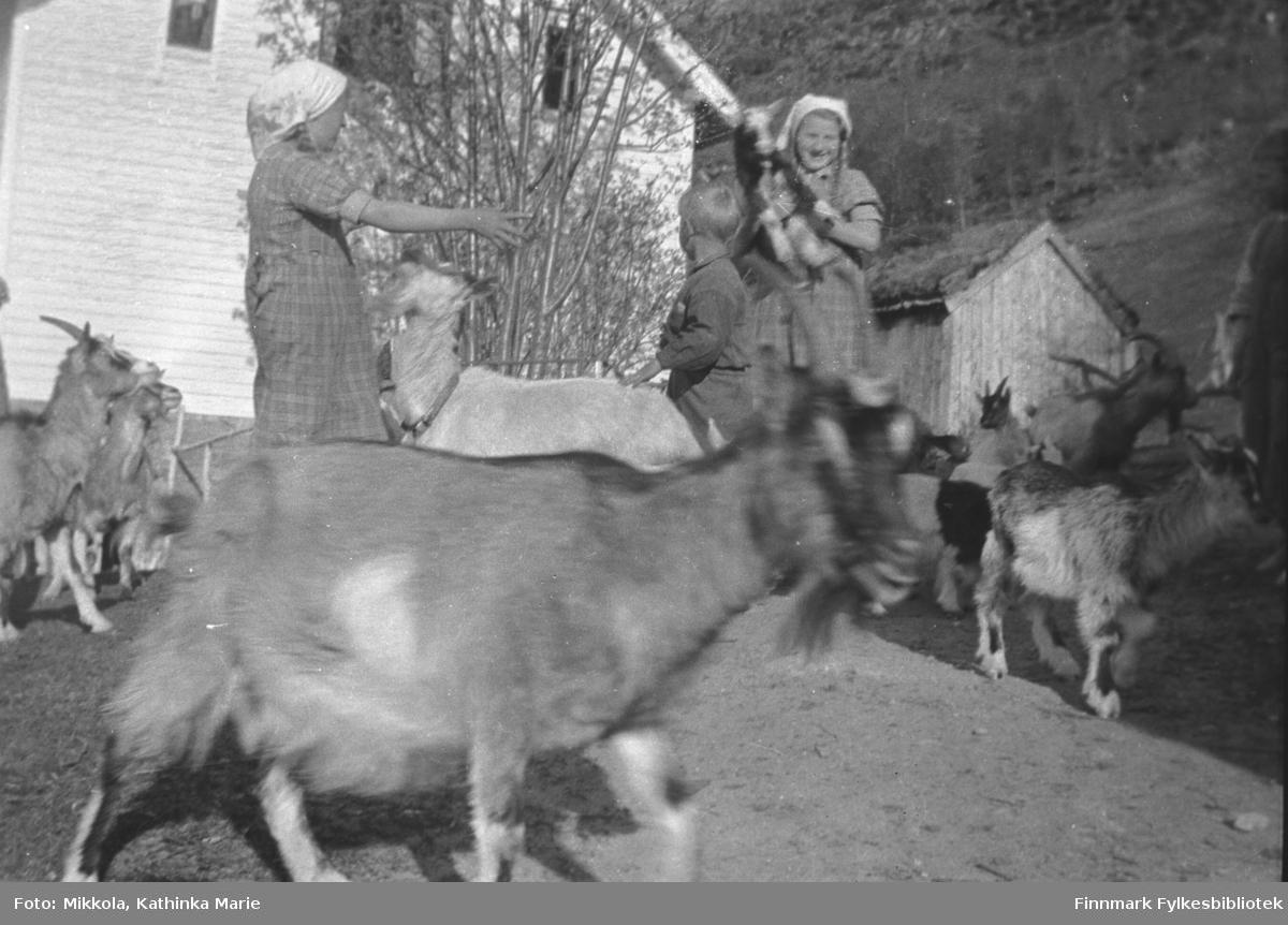 Astrid og Johannes Kornbergs barn med en flokk geiter på Kornberg. Barna fra venstre: Judit, Jon og Alvild. I bakgrunnen ser vi et bolighus. Bildet er tatt i 1938 i Møre og Romsdal, der Kathinka Mikkolas søster bodde. Familien drev med geiter frem til krigen.