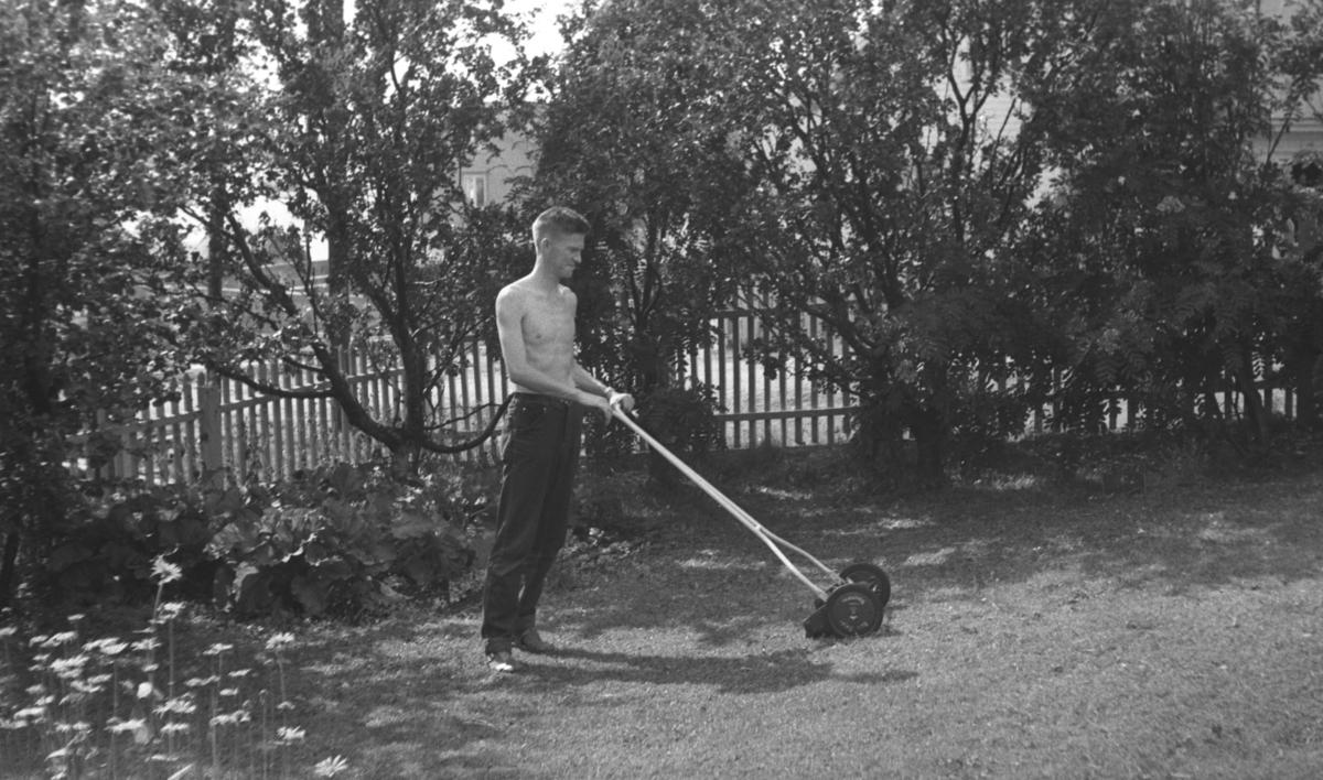 Tor Hauge klipper plenen i familiens hage i Nyborgveien.