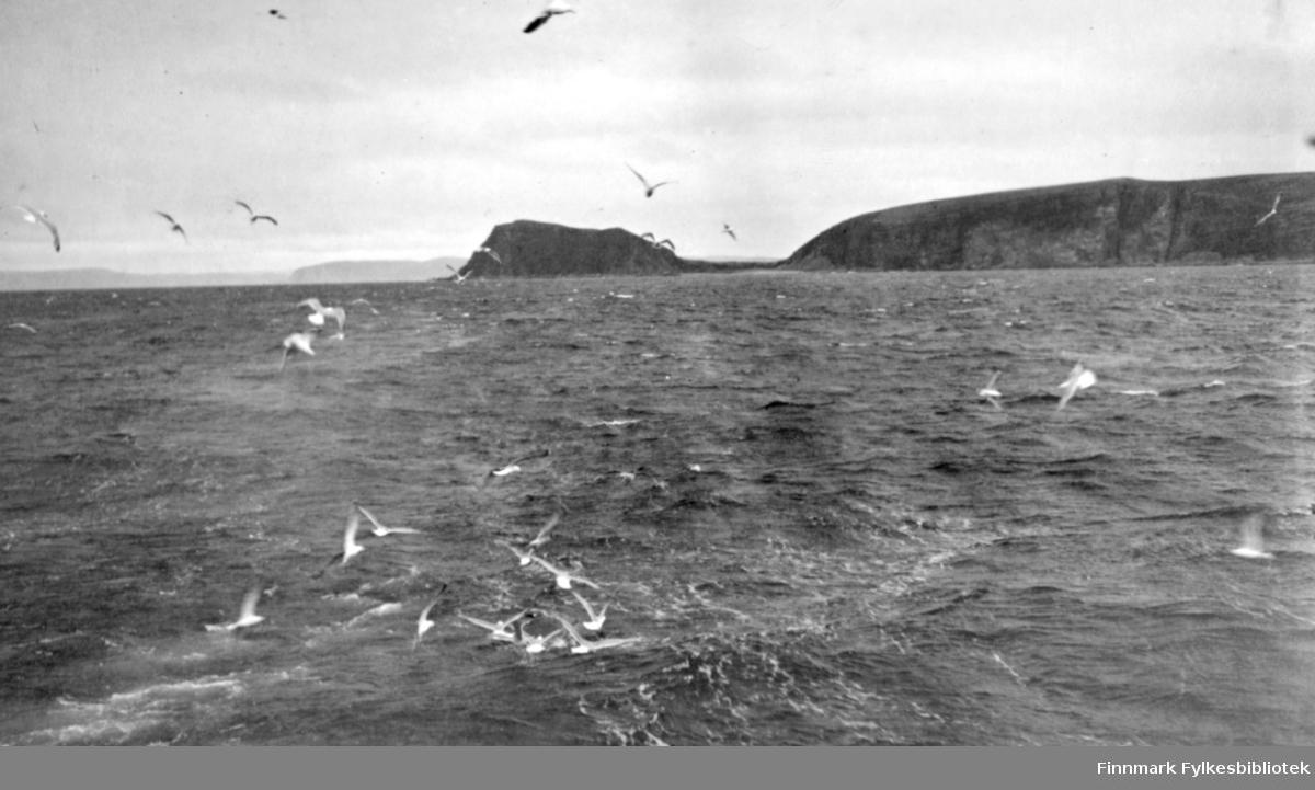 En del måker følger etter en båt som man bare ser kjølvannsstripa av. Litt vind som gir små bølger på sjøen. I bakgrunnen ligger Sværholt med Sværholtklubben med det ganske lave Sværholteidet midt på bildet. Noe diffust i bakgrunnen ses deler av Nordkinnhalvøya.