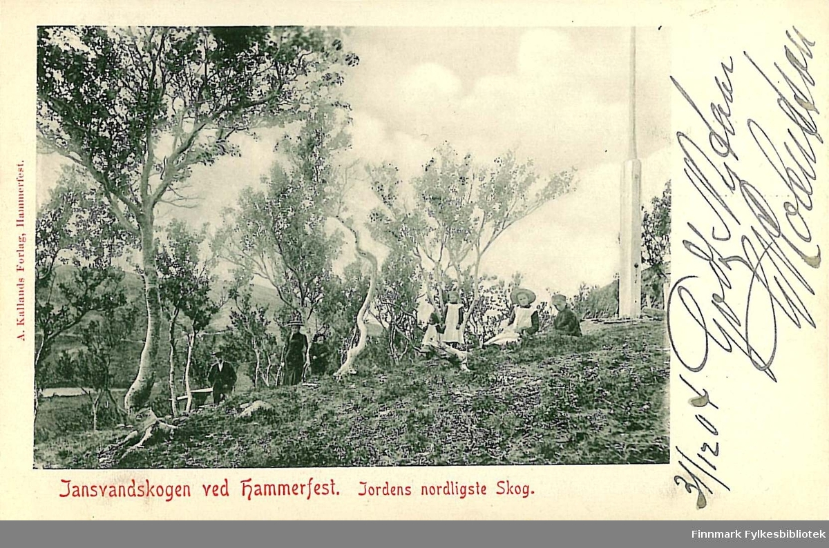 Postkort med motiv av Jansvannskogen ved Hammerfest. Kortet er en nyttårshilsen til Arthur Buck på Hasvik og er postlagt i Hammerfest nyttårsaften 1904.
