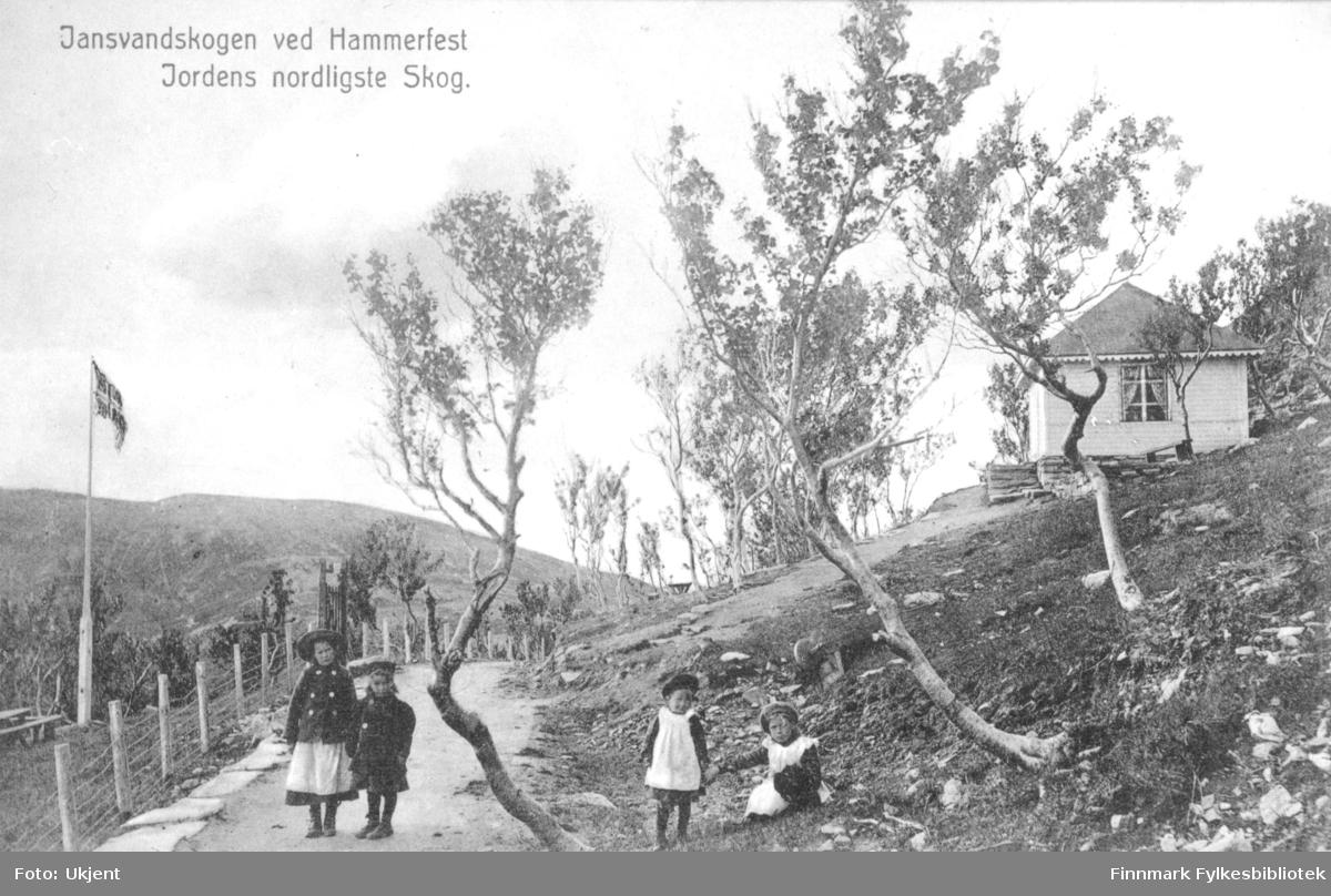 'Jansvandskogen ved Hammerfest, Jordens nordligste Skog.' står det trykket på dette postkortet. To små jenter står på en vei, to andre befinner seg i grøften. De er alle kledd i kjoler. Den eldste til venstre har på seg hatt og jakke. Man kan se flere trær rundt omkring og i bakken kan man se deler av et lite hus. På venstre side av veien svaier et norskeflagg i en flaggstang. Det er blitt satt opp et gjerde langs veien.