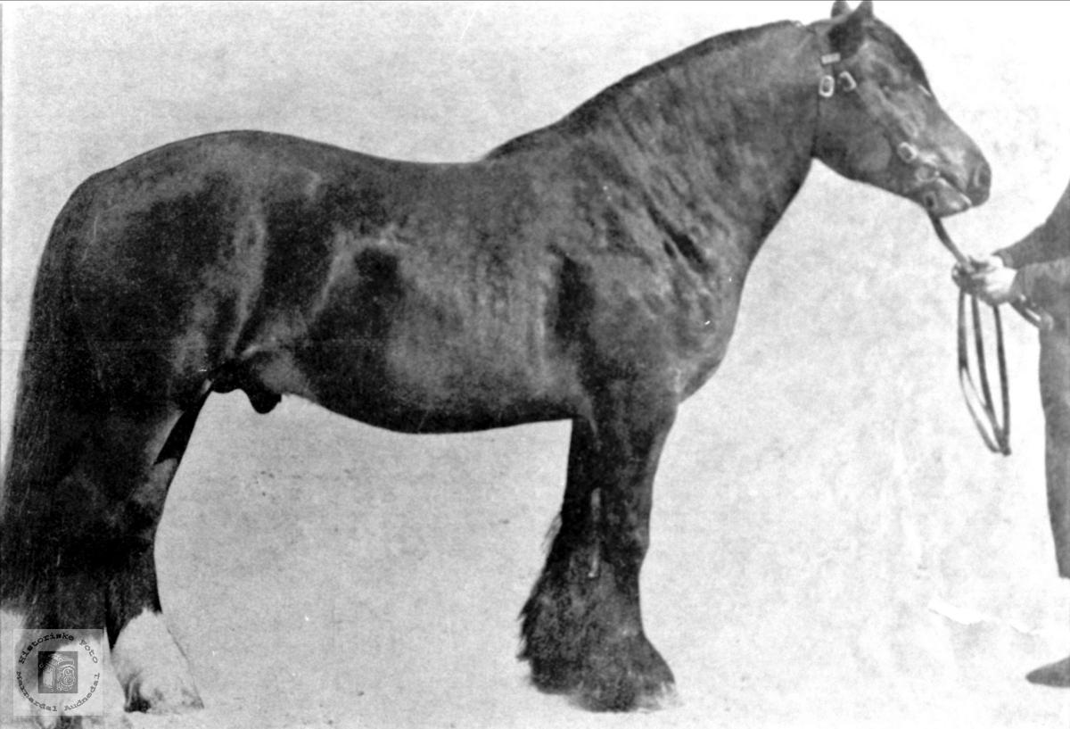 Hesten min. Asbjørn Olsen.