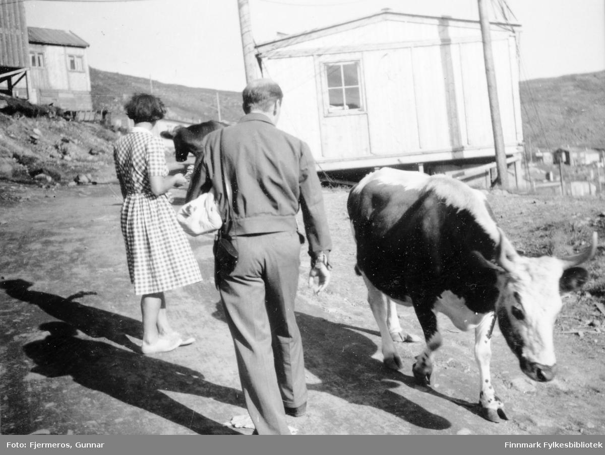 To personer går opp en smal grusvei. To kyr er også på veien og flere brakker står i bakgrunnen. Personene er ukjente, men bildet er tatt i Honningsvåg sommeren 1946.
