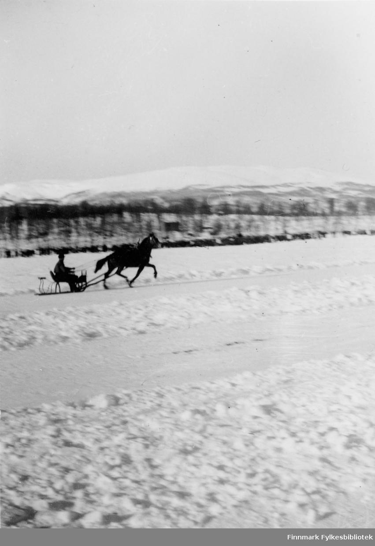Hest og slede, Tanaelva (?). En hest traver langs snødekt vei.