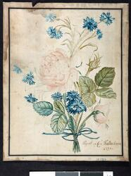 Ukjent tittel [plantestudie] [Akvarell]