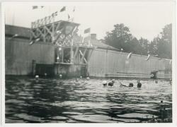 Simmare i vattnet vid Kallbadhuset, Uppsala