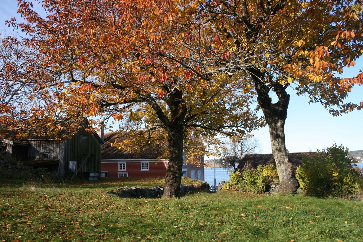 Merdøgaard, gårdstun sett fra SØ, fjøs og våningshus t.v. og sjøbod t.h.  Kirsebærtrær. med rødt løv. Litt av Revesandsfjorden i bakgrunnen t.h.