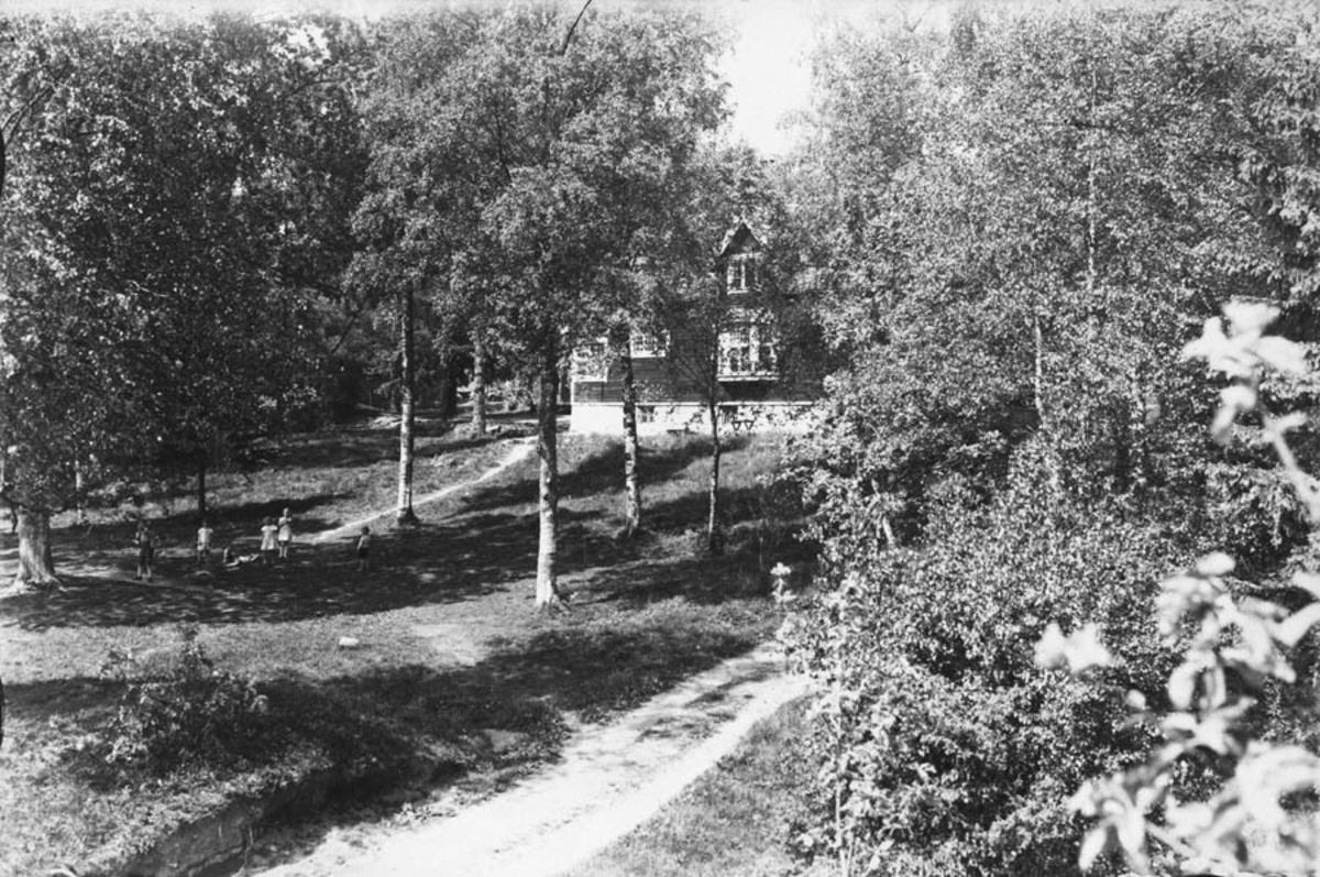 Bjerketrær med hus i bakgrunnen.