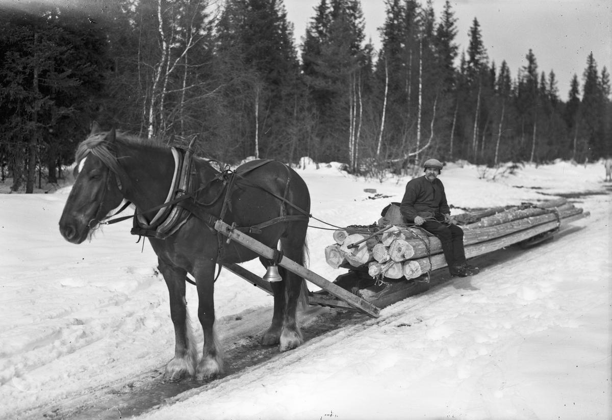 Kjøring av tømmer med hest og slede.