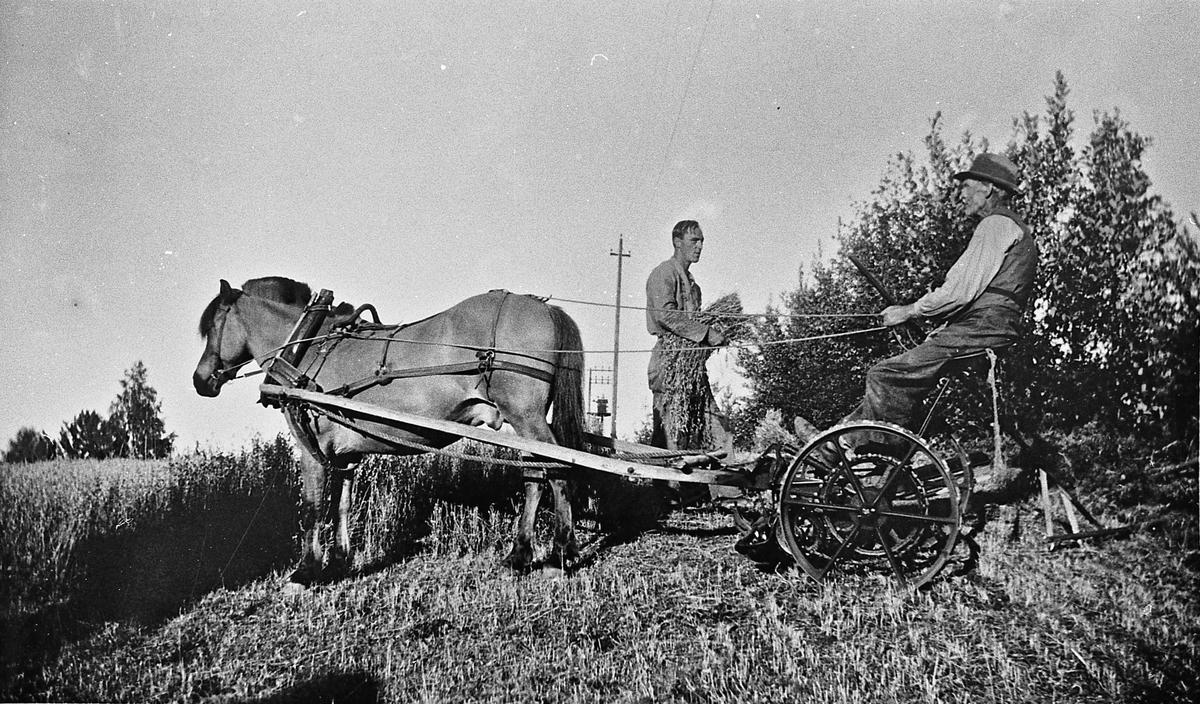 Høyonn med hest og slåmaskin, Hagan på Dal. Paul og Ole O Ladderud på bildet.