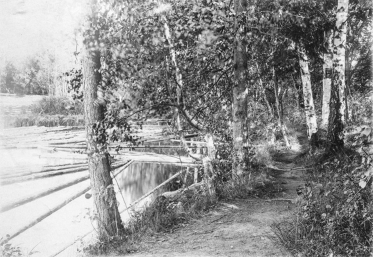 Det gjenværende av Lystparken Dorotheenbusk ved Andelva, Eidsvoll Verk.
