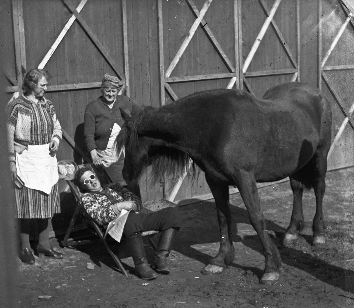 Hest og 3 kvinner