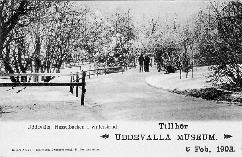 """Tryckt text på vykortets framsida: """"Uddevalla. Hasselbacken i vinterskrud""""."""