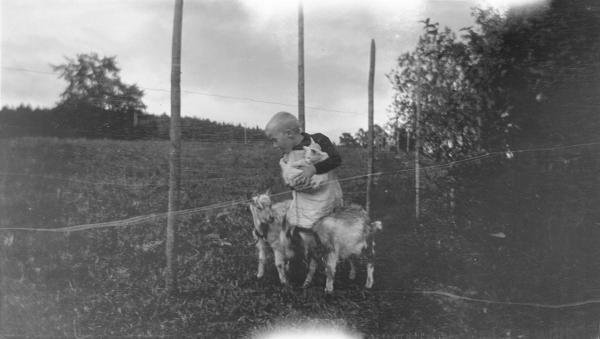 En gutt holder en katt i et godt favntak. Rundt gutten står det to geitekillingkillinger. Gutten og dyrene står ved et gjerde av lange staur og ståltråd. Landskapet består av enger, jorder og små skogholt.