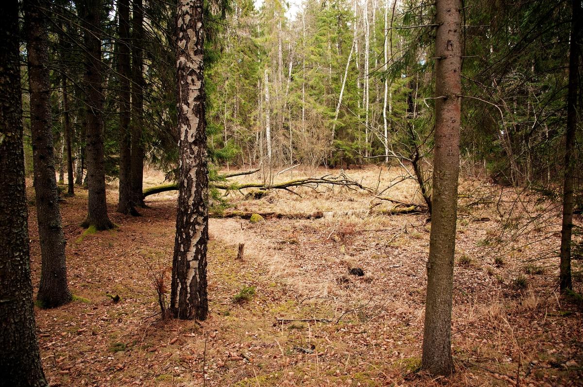 Hovinsholmen, Helgøya, Hedmark. Inne på holmen ligger det en myr. Den har tydeligvis blitt gravd ut engang, hvorfor er ikke kjent.