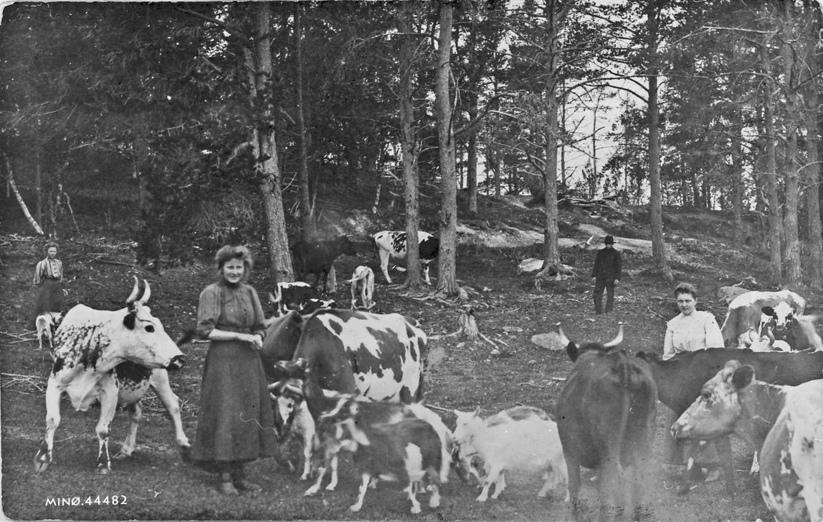 Personer, kyr og geiter, naturforhold.