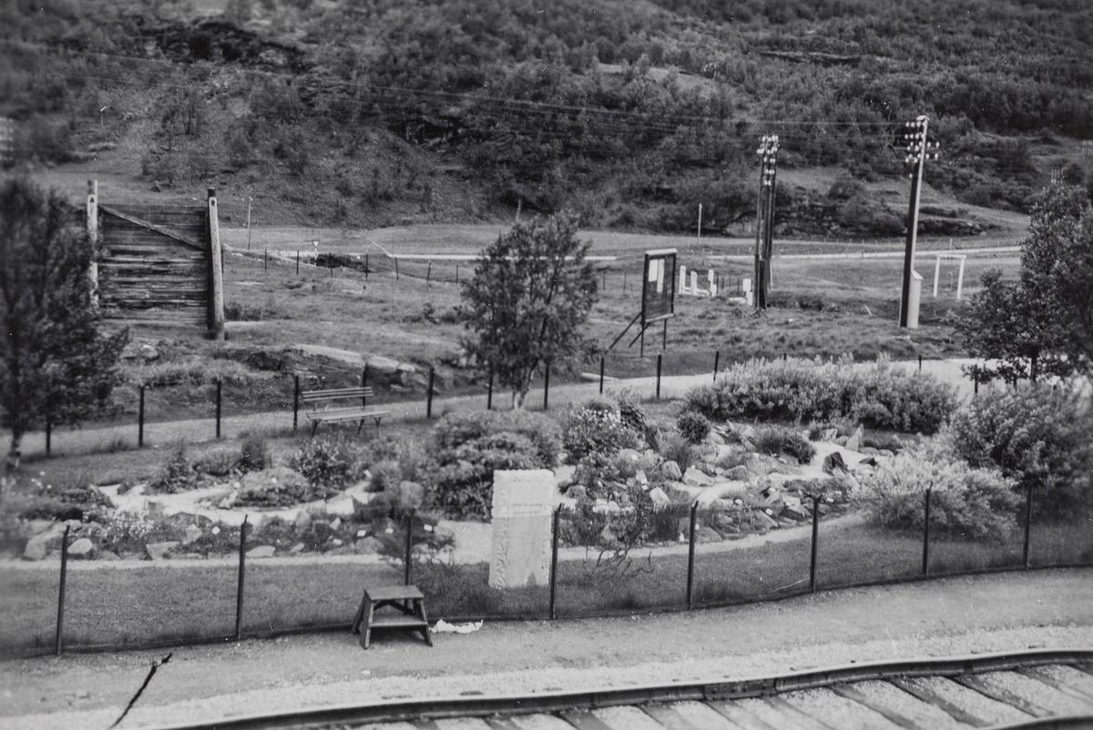 Stasjonshage med fjellblomster på Kongsvoll stasjon.