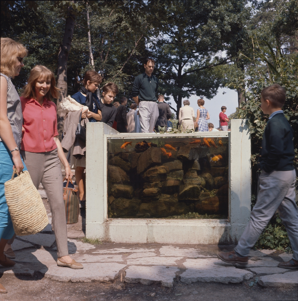 Barn och vuxna kring Lill-Skansens akvarium med guldfiskar.