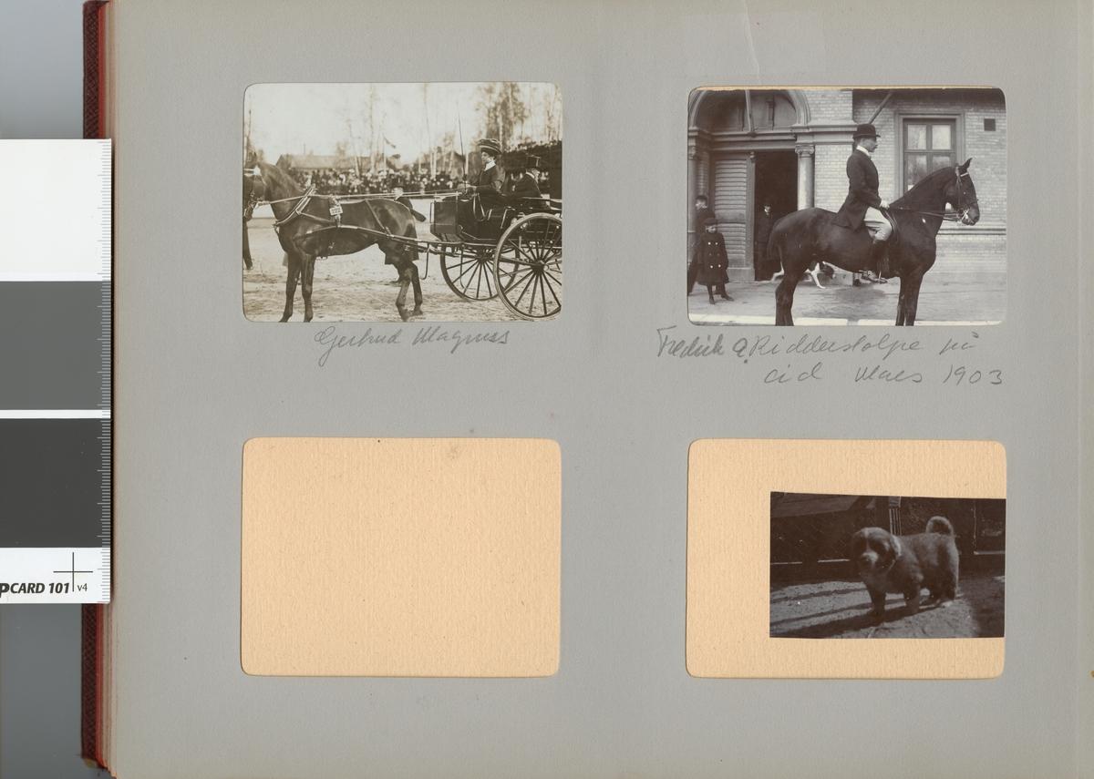 Gertrud Magnus (gift Trägårdh 1906) kör häst med vagn.
