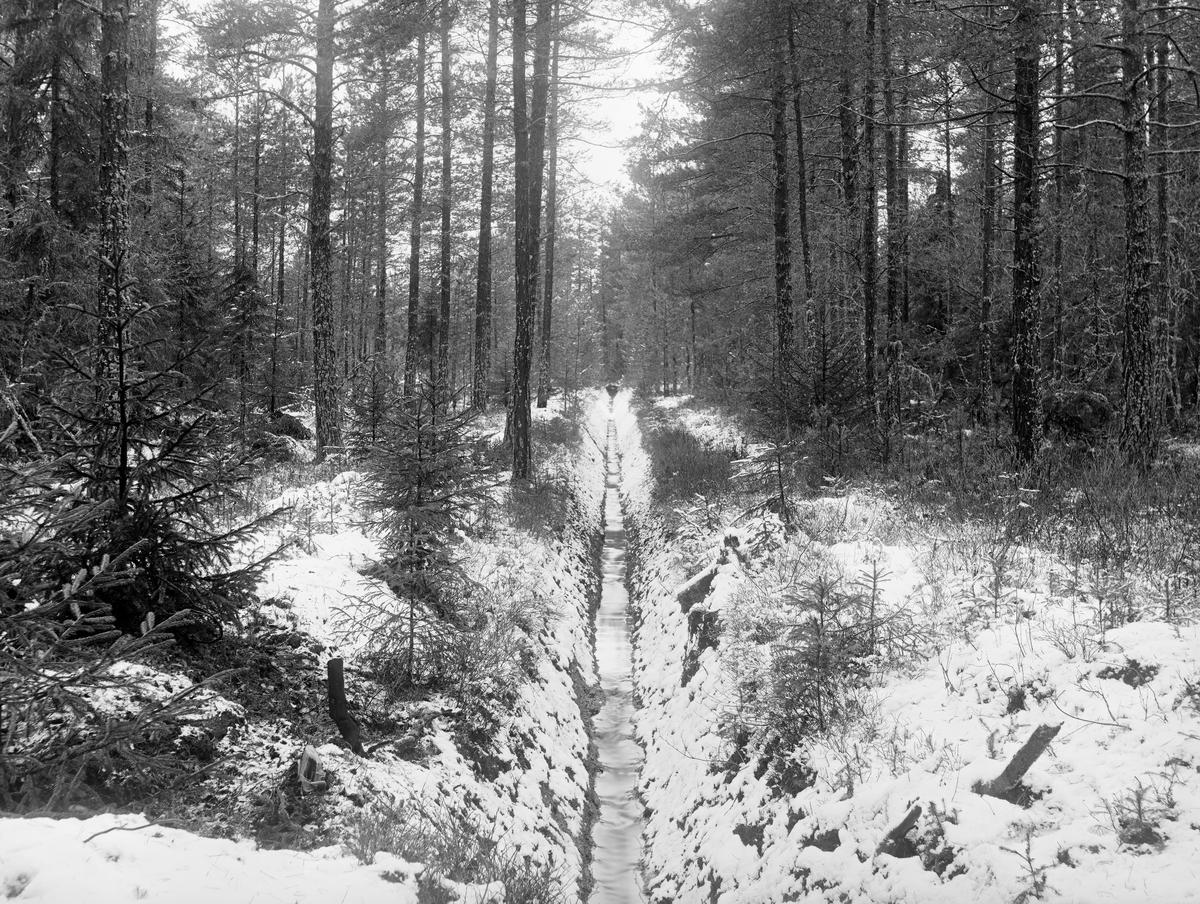 Grøftet, skogbevokst myr, antakelig i forvaltningsdistriktet Nedre Orkla i Sør-Trøndelag (jfr. fanen «Bildehistorikk»).  Fotografiet er antakelig tatt i overgangsfasen mellom høst og vinter, på et tidspunkt da det lå nysnø på marka, men før det vannet som rant i grøfta hadde frosset til is.  Fra omkring 1900 og framover til 1970-80-åra var det å gjøre lavproduktiv torvmark (myr) produktiv et sentralt mål i det norske skogbruket.  Målet var å lede vekk vannet, for derved å legge til rette for bedre oksygentilførsel og dermed skape bedre vekstvilkår for trevegetasjon.  Arbeidet ble utført ved hjelp av hakker og spader, og i mange tilfeller ble resultatene skuffende, dels fordi torva var for næringsfattig til at den kunne bli noe attraktivt voksested for trær, dels fordi mange av myrene lå i forsenkninger i terrenget der det hadde lett for å samle seg mye kaldluft, slik at småtrærne frøs.  I dette tilfellet ser det imidertid ut til å ha gått bra - langs grøftene vokste det fin ungskog med furu som dominerende treslag.  Jfr. SJF-F.010230.
