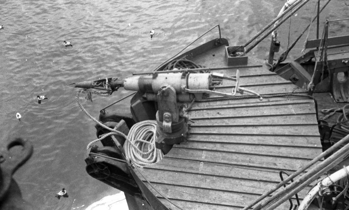 Hvalkanonen på fordekket er klar til bruk. Suderøy på fangstfeltet.