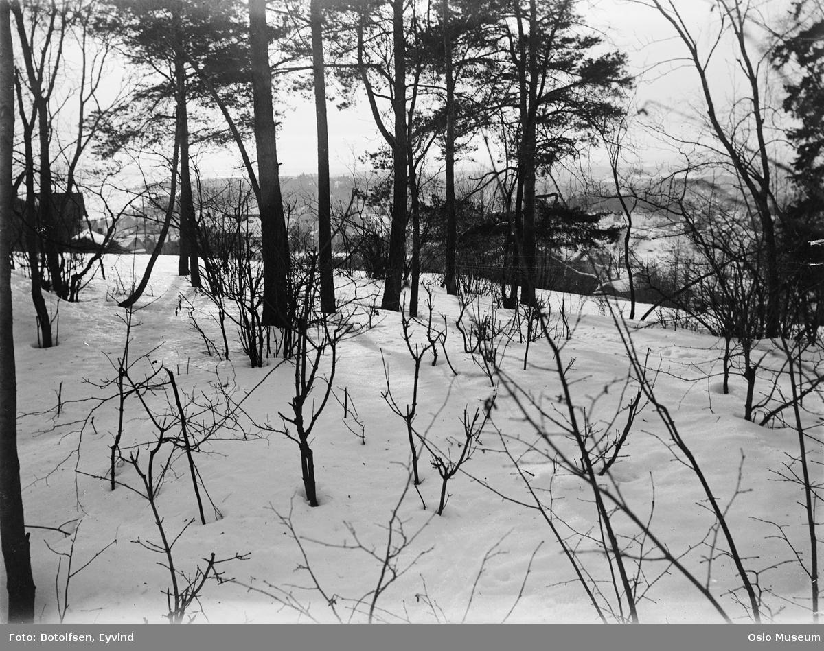 skog, snø, gård