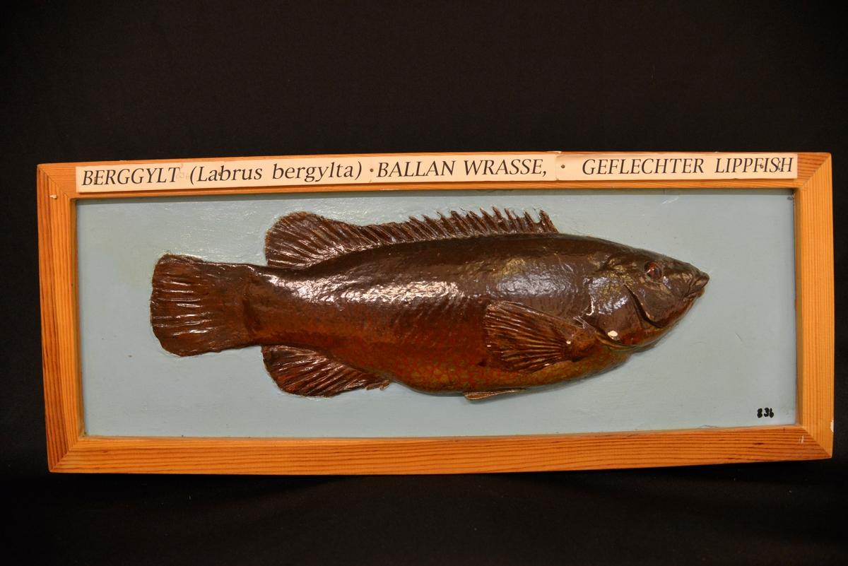 Rødlig fisk