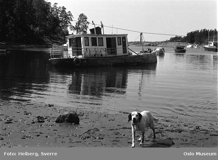 Bygdøy Sjøbad, strand, hund, fjord, båtvrak, båter