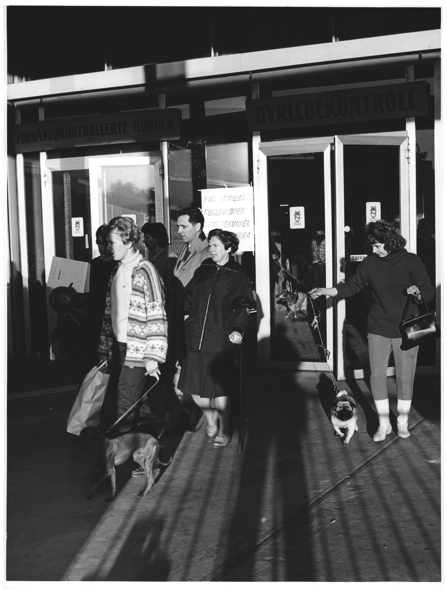 "Hundeutstilling, Sjølyst. ""Slutt for idag"""