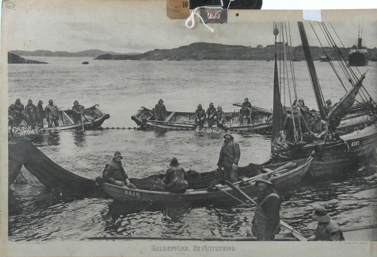 Notfiske etter sild. Notsteng, med flere båter rundt, bl.a. to gavlbåter. Bygnes t.h. Tjoland og Grindafjellet i bakgrunnen.
