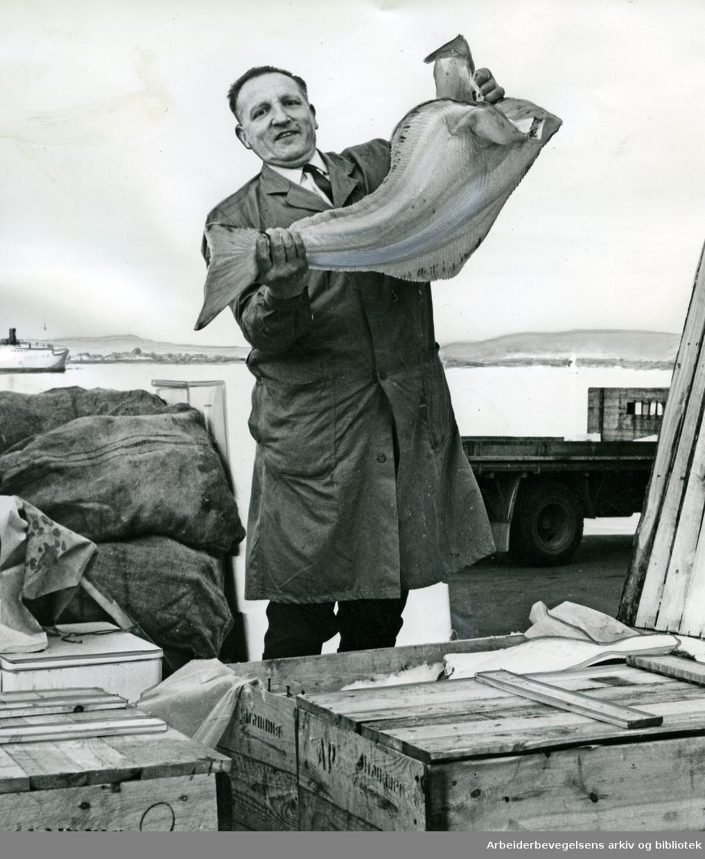 Einar Engebretsen, fiskeoppkjøper fra Drammen. .Oslo Fiskehall,.juli 1967