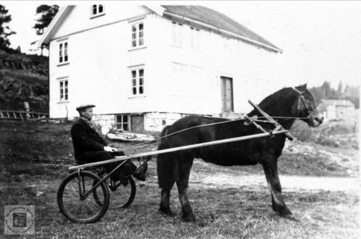 Mann på sulky med hest på Røynesdal, Bjelland.