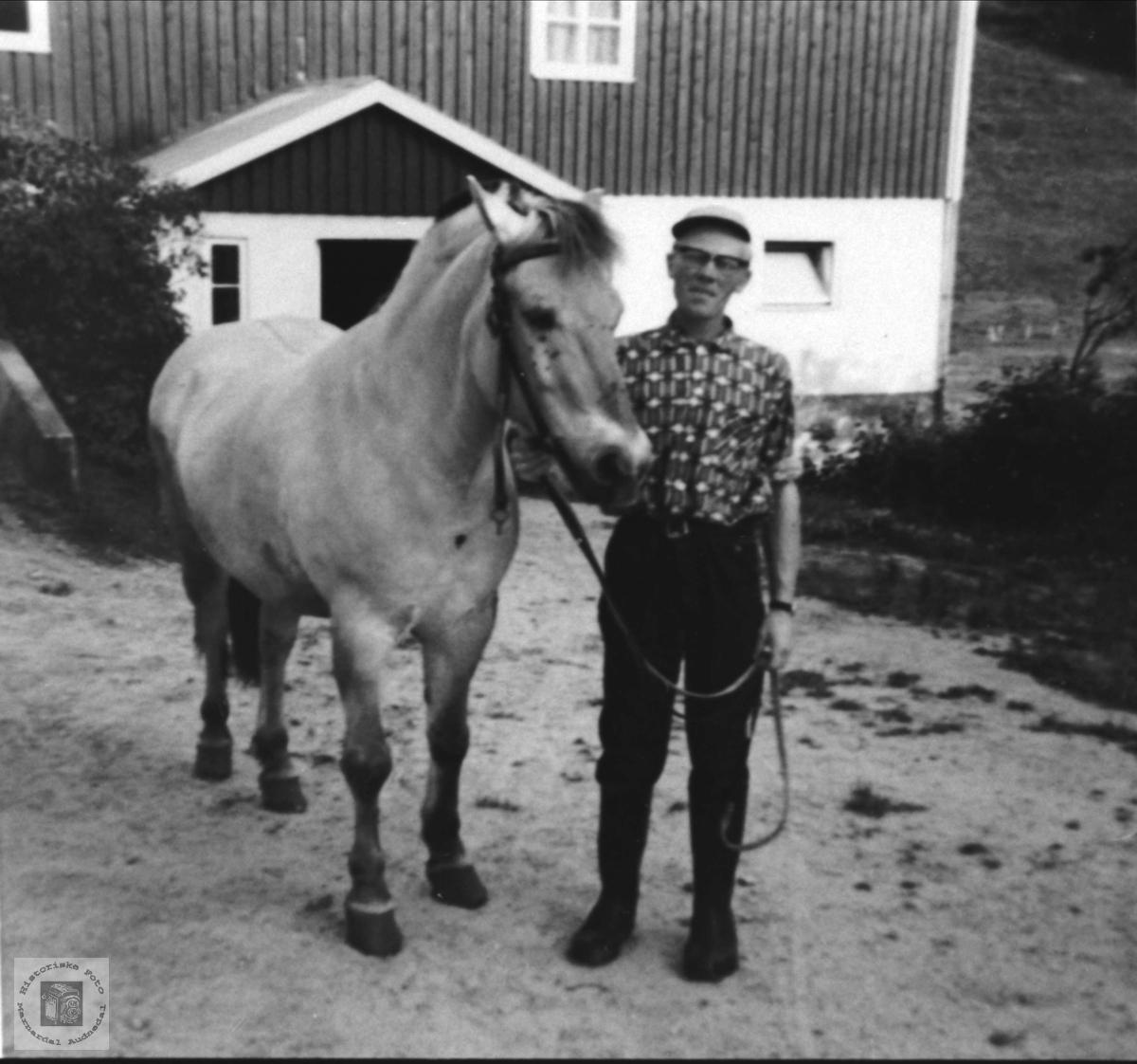 Bonden, Olav Finsdal med hesten Blakken, Øyslebø.