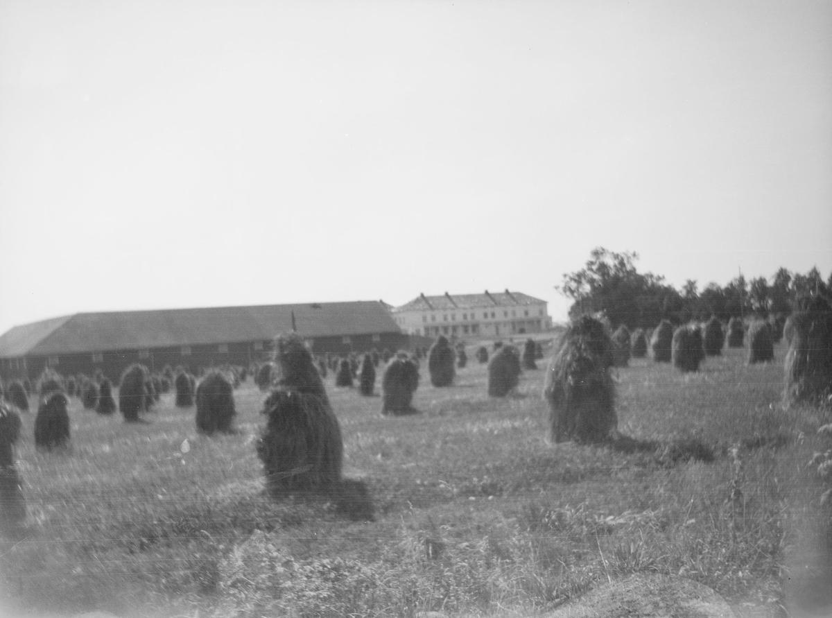 Høystakker i rader på jordet foran bebyggelsen på Linderud Gård. Bildet et tatt etter høyonna.