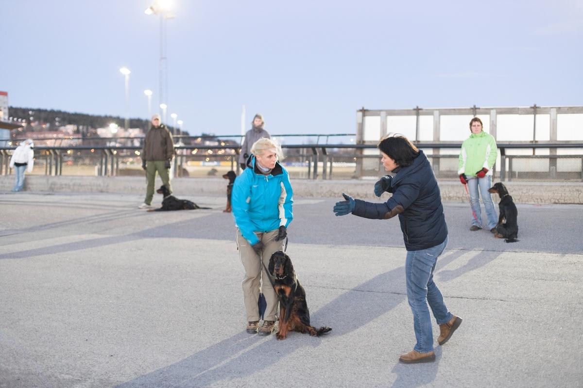 Dressurkurs for hund. Hundeeier og hund instrueres om øvelse.