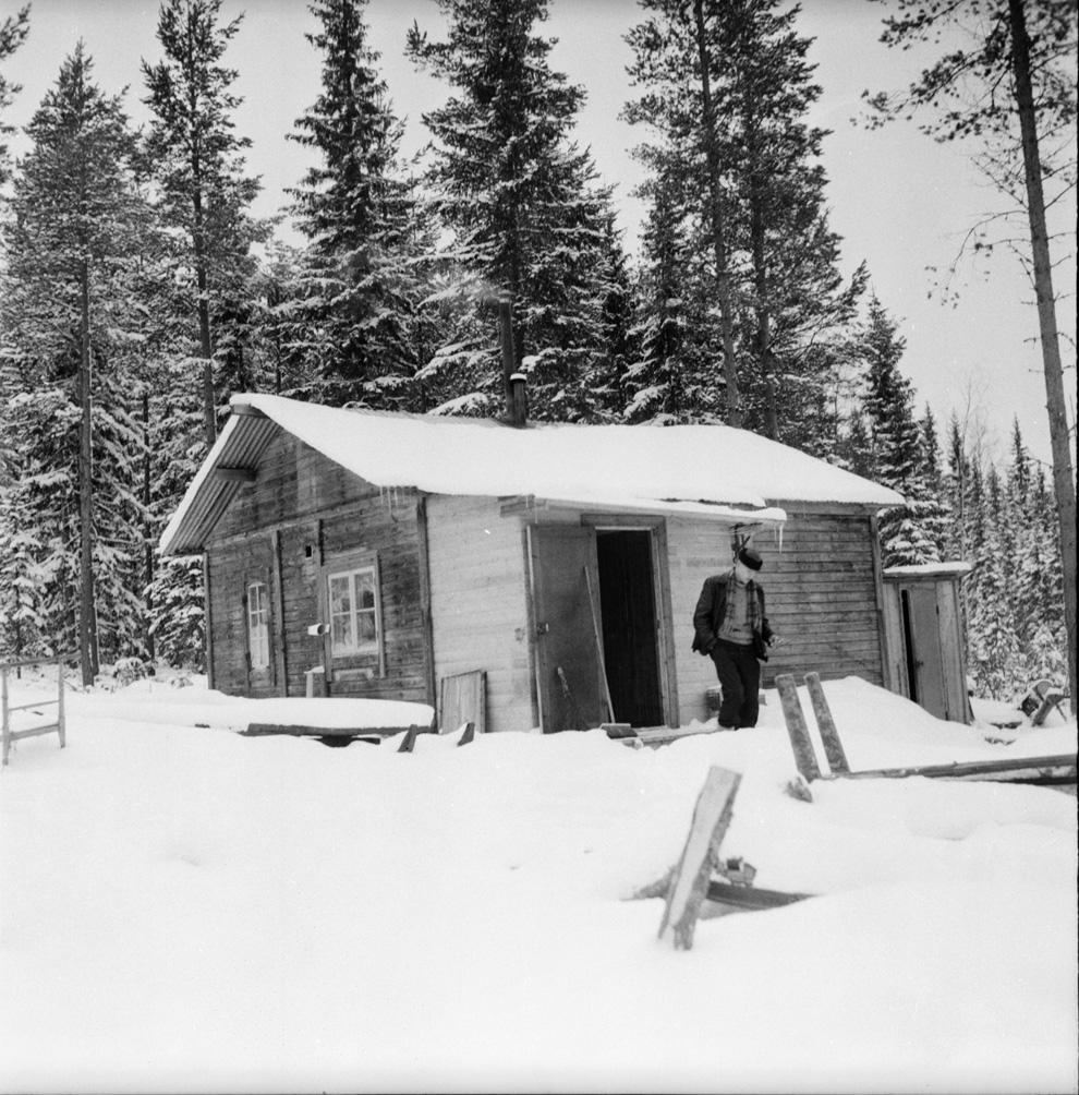 Bostadammen, koja 1958