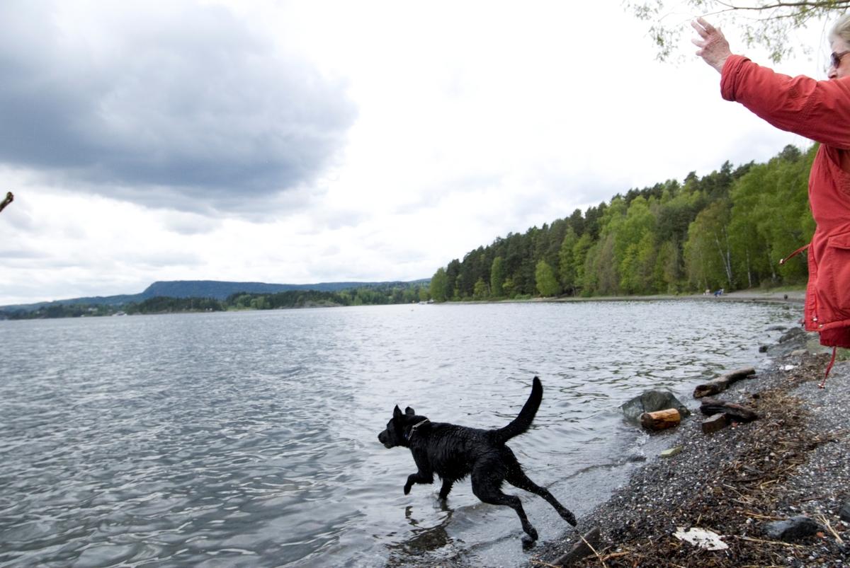 Hunden Chico på tur hopper ut i vannet etter en pinne som eieren kaster.