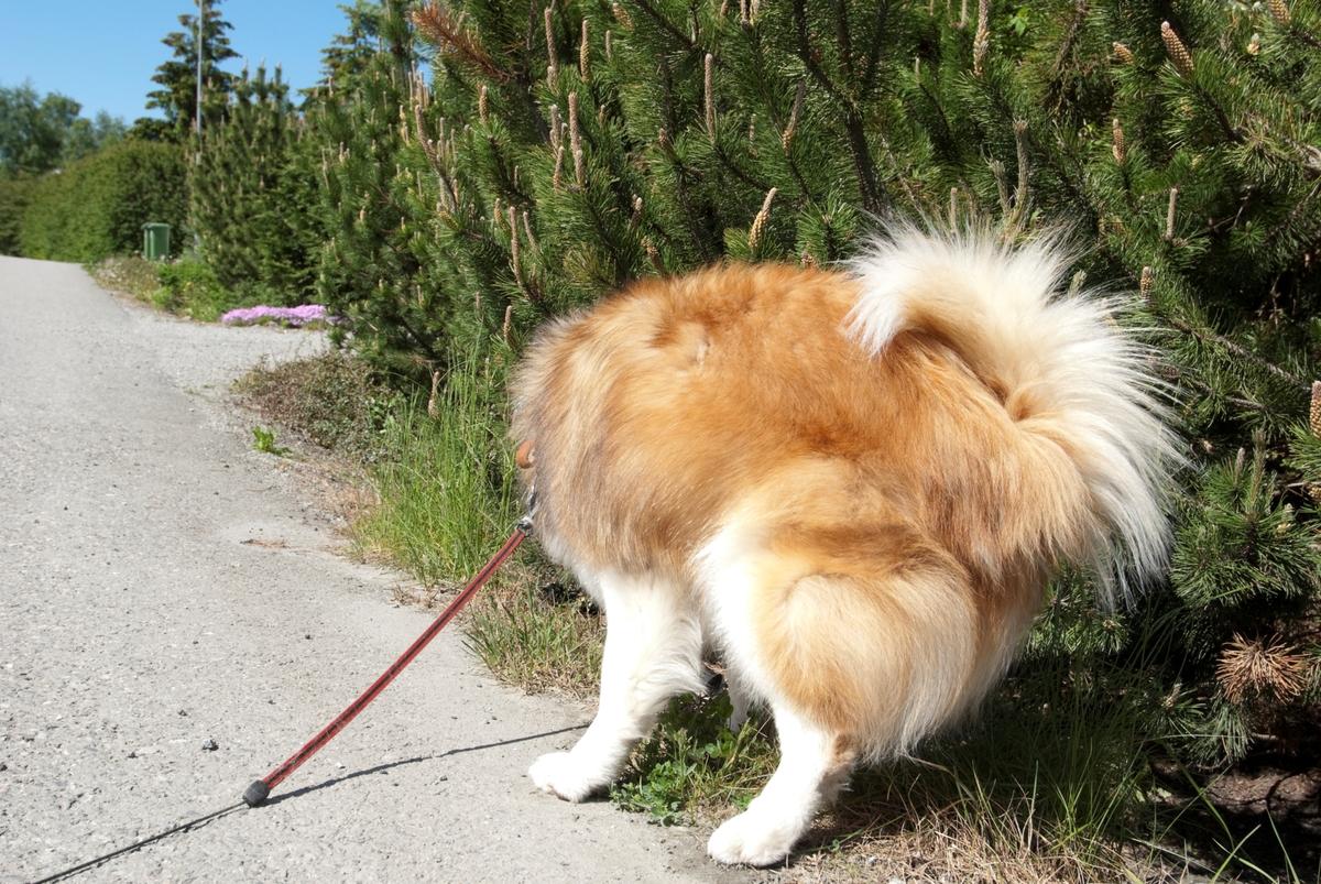 Hunden Romeo på tur.