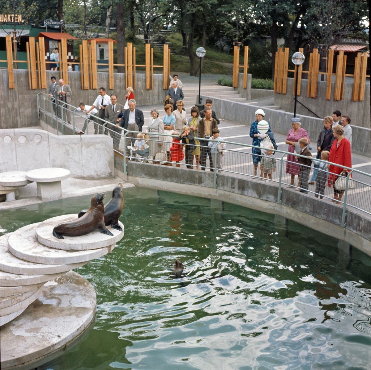 De Californiska sjölejonen matas inför publik.