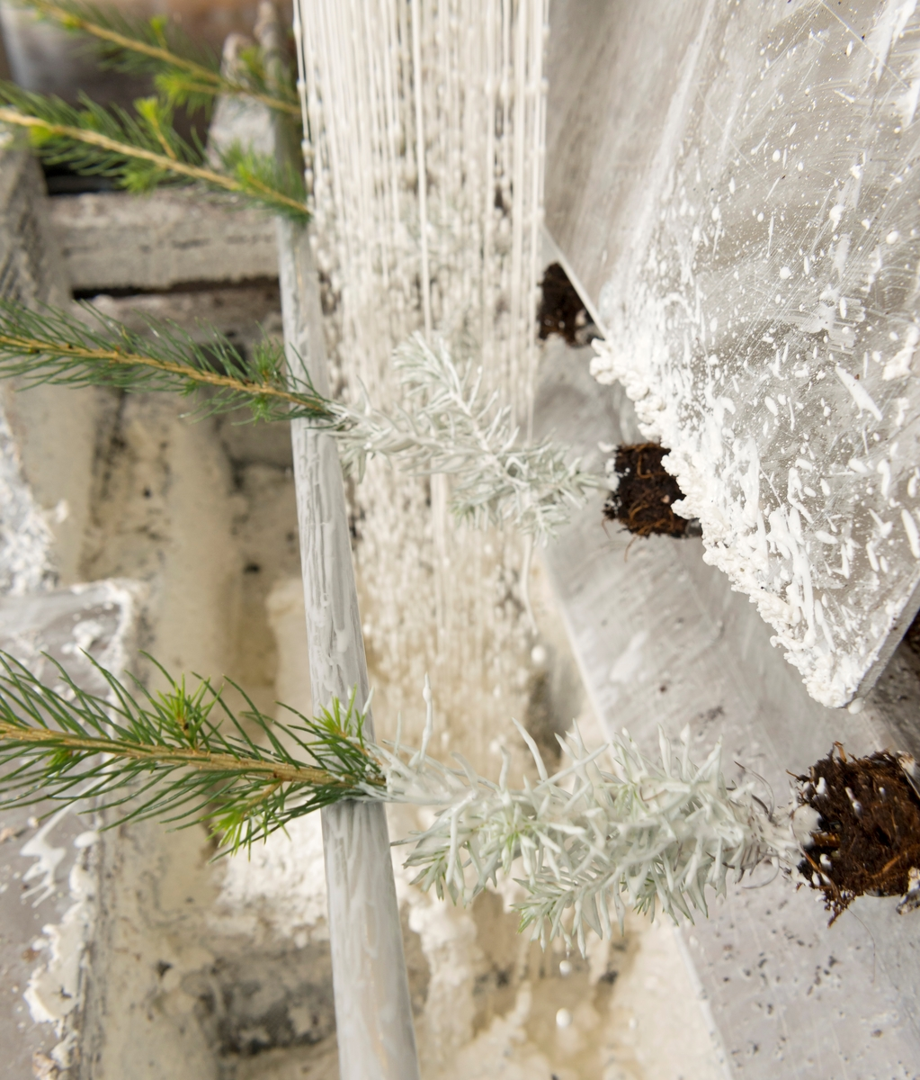 Voksing av granplante ved Biri planteskole i Oppland våren 2017.  Voksingsarbeidet foregår ved en samlebåndsmaskin som betjenes av fire-fem personer.  Rotklumpene på pottebrettplantene festes mellom fire fjærer på «staker» (holdere) føres langsomt mot en sone der de i to faser dusjes med voks og deretter avkjøles med kaldt vann.  Ettersom det bare er 10-12 centimeter ved rotsonen som skal vokses, «vris» båndet slik at plantene ligger i horisontal stilling i de nevnte dusjsonene.  Deretter rettes de opp igjen og går videre til en posisjon hvor voksede planter tas opp av stakene og pakkes i bunter på 40 med tynn plastfolie omkring rotklumpene.  Buntene samles i rammer av trespon.  Dette fotografiet er tatt i det partiet der plantene først dusjes med varm voks, deretter med avkjølende vann.  Voksinga av skogplantene er et alternativ til kjemisk sprøyting mot gransnutebiller (Hylobius abietis), som har gjerne angriper rothalsene på skogplantene like etter utplanting.  De kjemiske midlene skylles lett vekk dersom det kommer mye nedbør i den sårbare fasen etter utplanting.  Voksede planter koster cirka 50 øre mer enn dem som gis kjemisk insektbehandling.