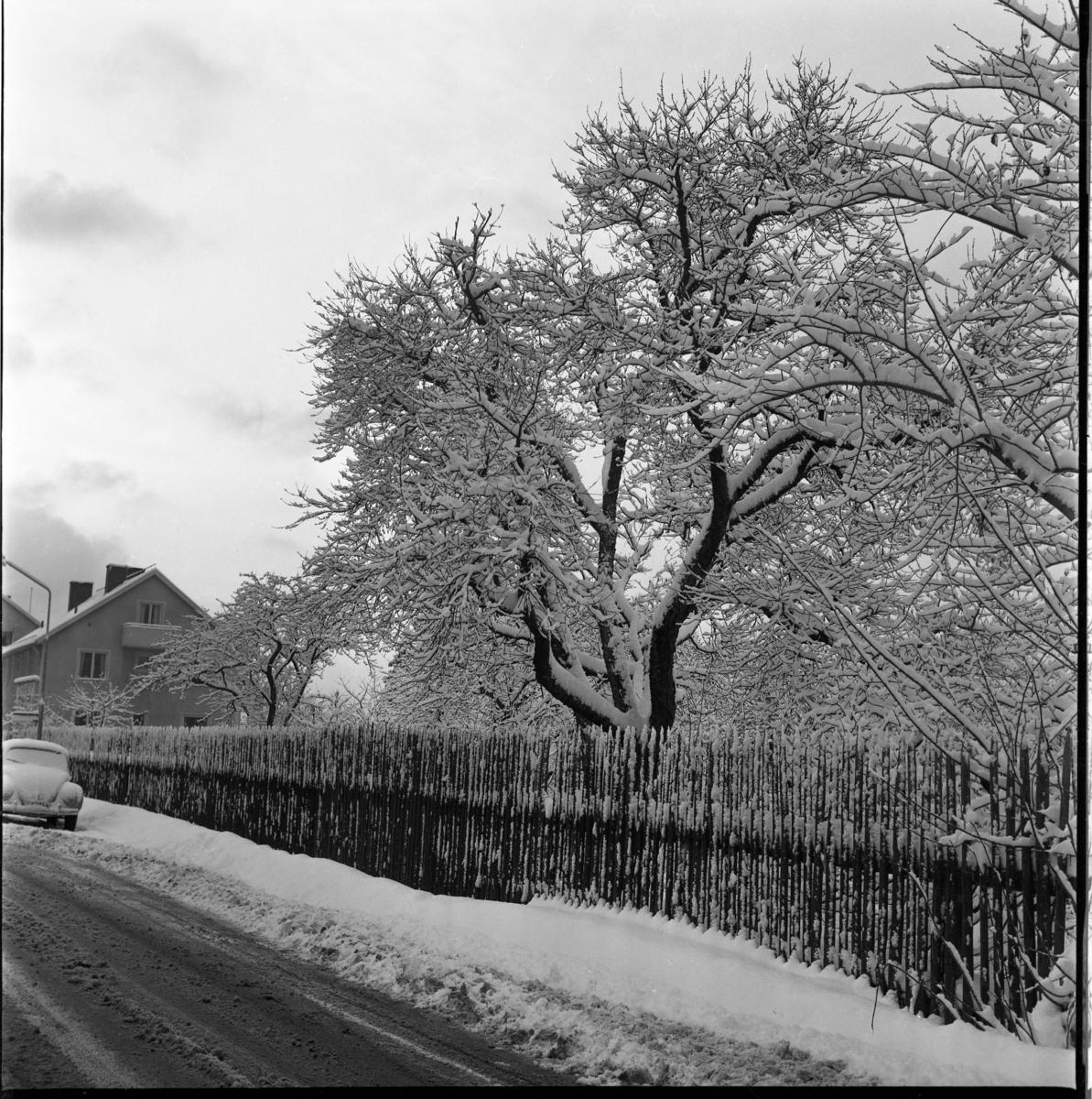 Vinter. En något slaskig väg utmed ett staket med träd på andra sidan. På vägens bortre del står en VW parkerad. Möjligen Sjögatan i Gränna.