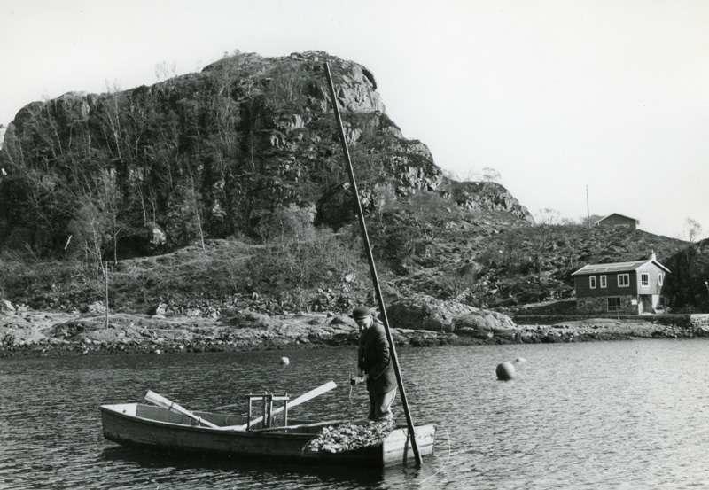 Mann i båt arbeider med østersoppdrett
