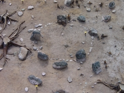 Domarringen A6 på gravfältet RAÄ Barnarp 22, L1974:2431 på T