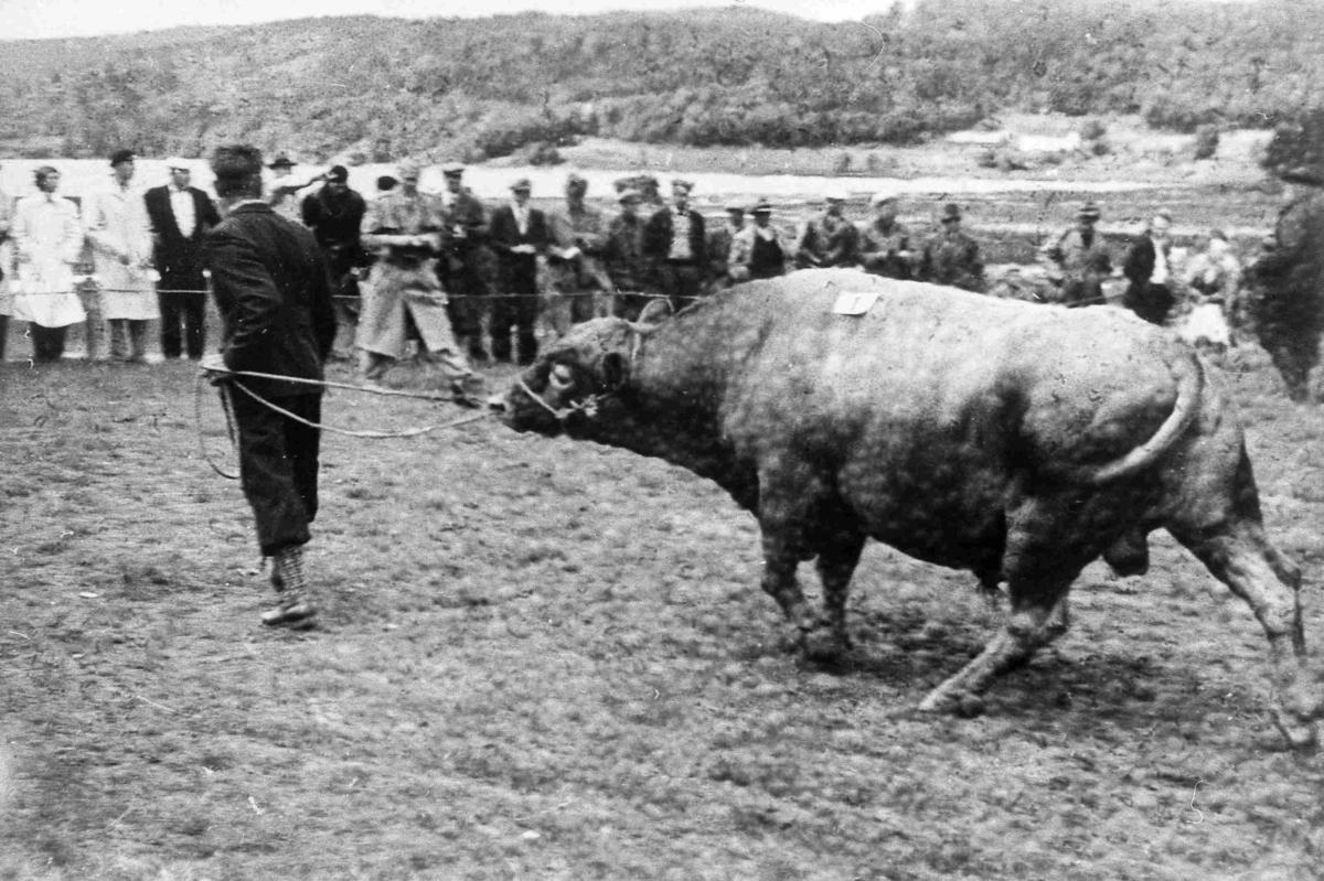 Bilder fra Birkenes kommune Fesjå - Fiane i 1952
