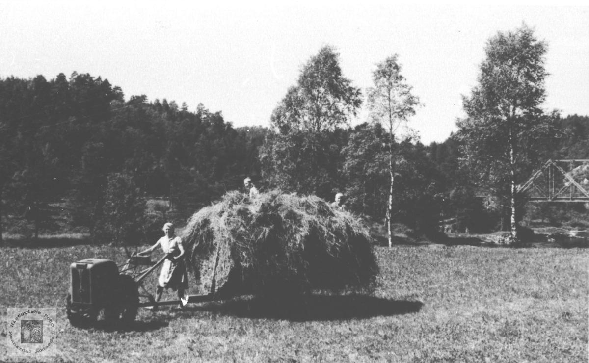Høying med tohjulstraktor, Maddan Øyslebø.