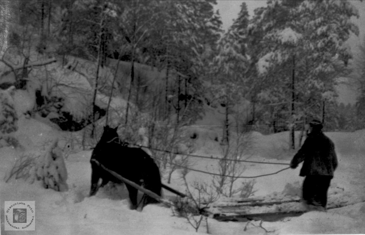 Skogarbeid Øyslebø.